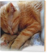 Orange Kitten Sleeping In Silk And Satin Wood Print