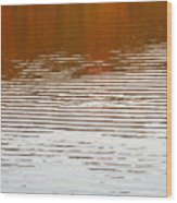 Reflections Of Fall Leaves And Sunlit Ripples On Jamaica Pond Wood Print