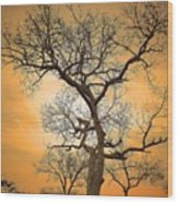 Orange Leopard Wood Print