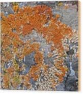 Orange Lichen Wood Print