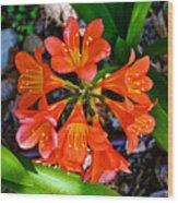 Orange Trumpet Flowers At Pilgrim Place In Claremont-california Wood Print
