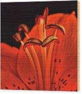 Orange Lilly  Wood Print