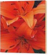 Orange Lily Closeup Digital Painting Wood Print