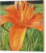 Orange Lily Dew Drop Wood Print