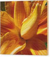 Orange Lily Flower Art Print Summer Lilies Baslee Wood Print
