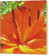 Orange Lily Flower Art Print Summer Lily Garden Baslee Troutman Wood Print