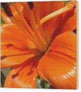 Orange Lily Wood Print