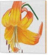 Orange Lily No 3 Wood Print