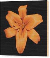Orange Lily On Black Wood Print