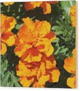 Orange Marigolds In Bloom Wood Print