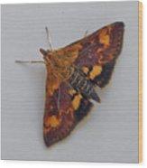 Orange Mint Moth - Pyrausta Orphisalis Wood Print