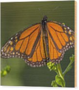 Orange Monarch Wood Print
