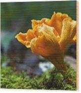 Orange Mushroom Flower On The Forest Floor Wood Print
