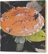 Orange Mushroom Wood Print