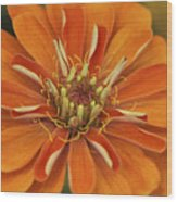 Orange Orange Orange Wood Print