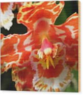 Orange Orchid Wood Print