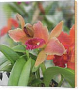 Orange Orchids 2 Wood Print