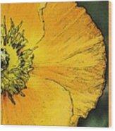Orange Oriental Poppy Wood Print