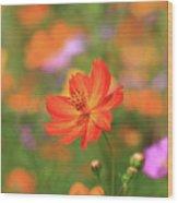 Orange Painted Landscape Wood Print