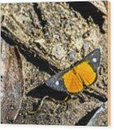 Orange Patch Wood Print