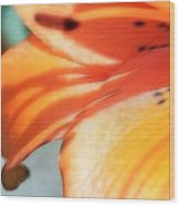 Orange Petal Dreams Wood Print