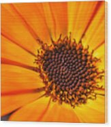 Orange Petal Wood Print