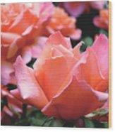 Orange-pink Roses  Wood Print