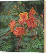 Orange Poinciana Tree Wood Print