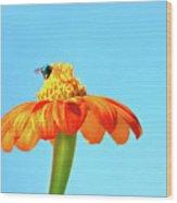 Orange Pop Flower Cafe Wood Print