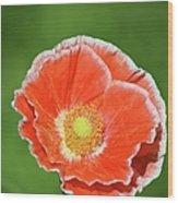 Orange Poppy 2 Wood Print