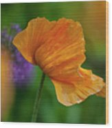 Orange Poppy Flower Wood Print
