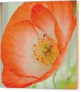 Orange Poppy Offering Nectar Wood Print