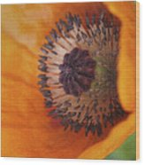 Orange Poppy With Texture Wood Print