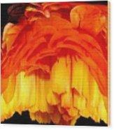 Orange Ranunculus Polar Coordinate Wood Print