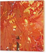 Orange Red Fall Leaves Autumn Tree Art Baslee Troutman Wood Print