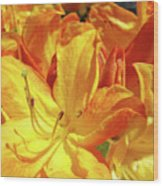 Orange Rhodies Flowers Art Rhododendron Baslee Troutman Wood Print