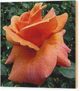Orange Rose 1 Wood Print