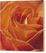 Orange Rose 2 Wood Print