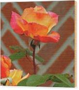 Orange Rose And Bricks Wood Print