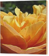 Orange Rose Art Prints Baslee Troutman Wood Print