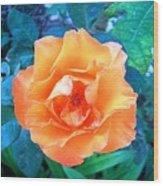 Orange Rose On Green  Wood Print