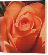 Orange Rose Photograph Wood Print