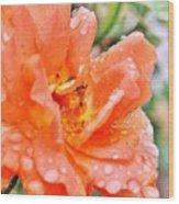 Orange Rose Raindrops Wood Print