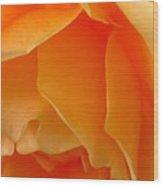 Orange Rose Side View Wood Print
