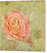 Orange Rose With Old Paint Texture Background Wood Print