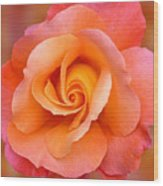 Orange Rosebud Highlight Wood Print