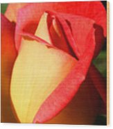Orange Rosebud Wood Print