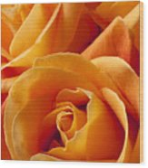 Orange Roses Wood Print by Garry Gay