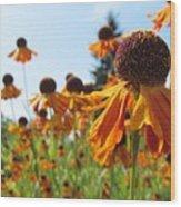 Orange Rudbeckia Wood Print