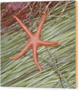 Orange Sea Star Wood Print